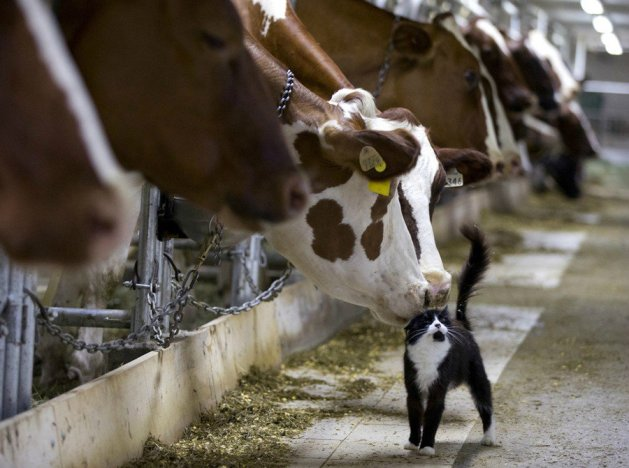 cat-and-cow